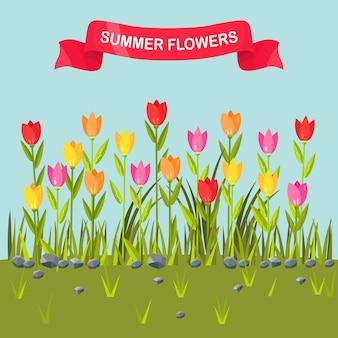 Pole kwiatów z kolorowych tulipanów. granica zielona trawa.
