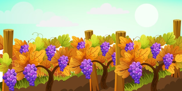 Pole pełne drzew winogronowych