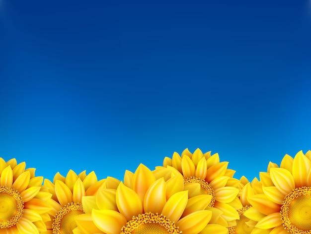 Pole słoneczniki i niebieskie niebo.