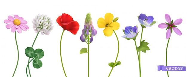 Polne kwiaty 3d realistyczny zestaw ikon