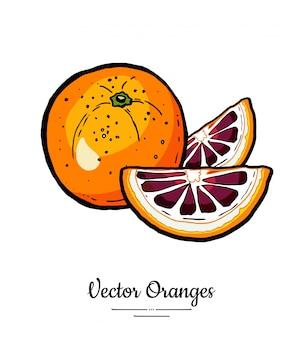 Pomarańcze wektor zestaw na białym tle. całe czerwono-pomarańczowe pokrojone pokrojone półokrągłe plastry. wyciągnąć rękę owoców.
