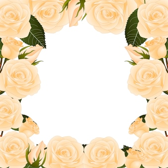 Pomarańczowa róża granicy