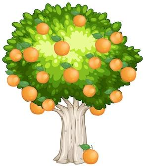 Pomarańczowe drzewo na białym tle