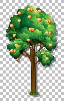 Pomarańczowe drzewo na przezroczystym tle