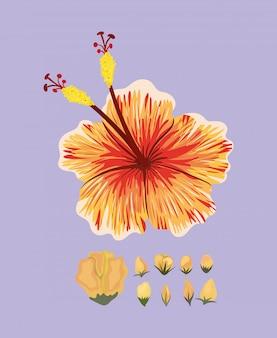 Pomarańczowy hawajski kwiat malarski, naturalny kwiatowy ornament roślinny dekoracja ogrodowa i ilustracja motyw botaniczny