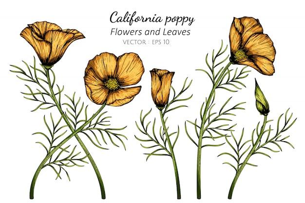 Pomarańczowy kalifornia makowy kwiat i liść rysunkowa ilustracja z kreskową sztuką na białych tło.