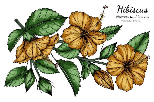Pomarańczowy kwiat hibiskusa i liść rysunek ilustracja