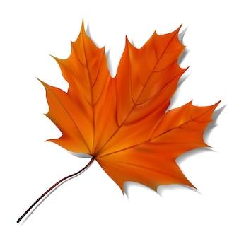 Pomarańczowy liść klonowy na białym tle.