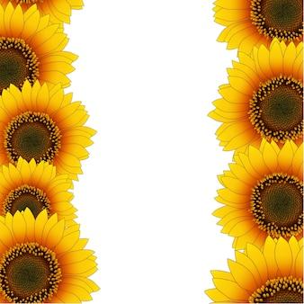 Pomarańczowy żółty słonecznik granicy