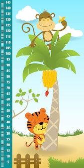 Pomiar wysokości ściany śmiesznej małpy na drzewie bananowym z tygrysem