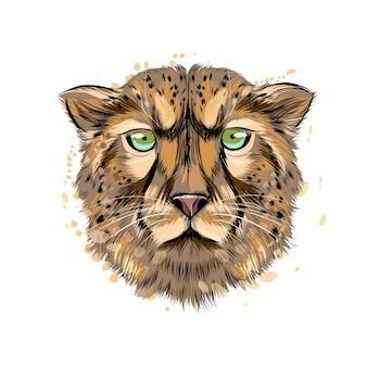 Portret głowy geparda z odrobiną akwareli, kolorowy rysunek, realistyczny. ilustracja wektorowa farb