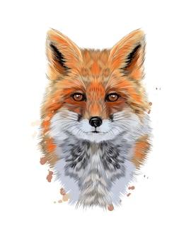 Portret głowy lisa z odrobiną akwareli