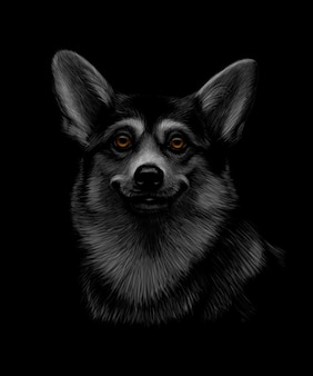 Portret Głowy Welsh Corgi Na Czarnym Tle. Ilustracja Premium Wektorów