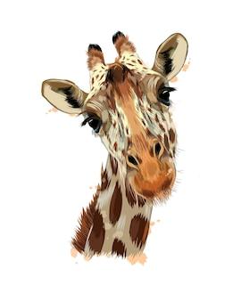 Portret głowy żyrafy z odrobiną akwareli, kolorowy rysunek, realistyczny. ilustracja wektorowa farb
