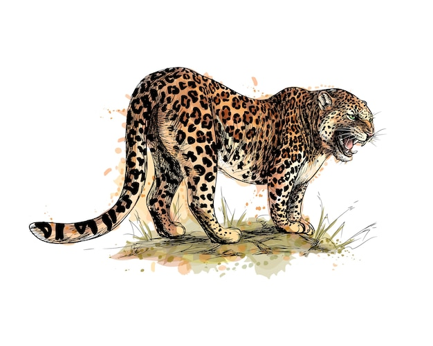 Portret lamparta z odrobiną akwareli, ręcznie rysowane szkic. ilustracja farb
