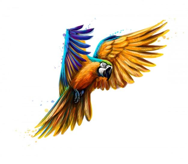 Portret niebiesko-żółtej ara w locie z odrobiną akwareli. papuga ara, papuga tropikalna. ilustracja wektorowa farb