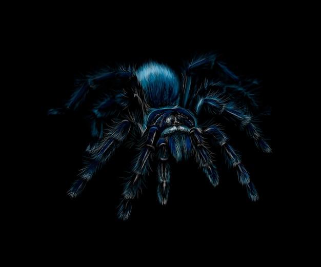 Portret pająka tarantula grammostola na czarnym tle. ilustracja