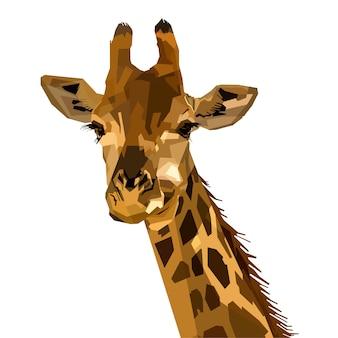 Portret przyrody ssaka fauny żyrafa