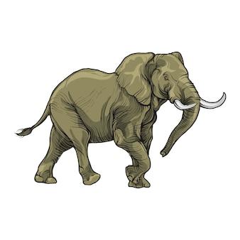 Postać słonia na białym tle.