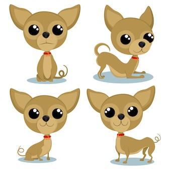 Postać z kreskówki chihuahua w różnych pozach. śliczne małe psy wektor zestaw na białym tle