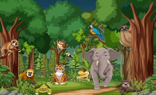 Postaci z kreskówek dzikich zwierząt na scenie leśnej