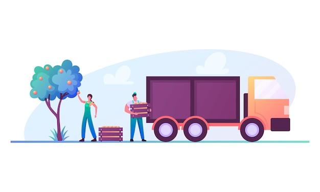 Postacie ogrodników lub rolników zbierają dojrzałe owoce do drewnianych skrzynek i ładują je do ciężarówki w celu dostarczenia