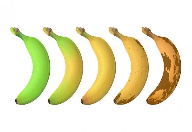 Poziom dojrzałości owoców bananów od zielonego niedojrzałego do brązowego zgniłego. wektor zestaw na białym tle