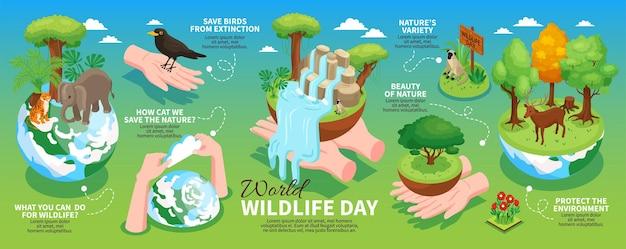 Poziomy układ infografiki światowego dnia dzikiej przyrody z informacjami o ochronie środowiska i izometrycznym dzikich zwierząt