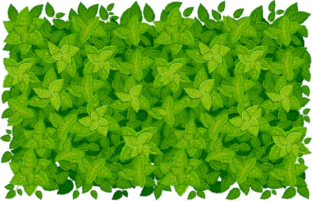Poziomy wzór zielonych liści. różne kształty liści drzew i roślin. elementy kwiatowe, liściowe. ilustracja na białym tle. strona internetowa i aplikacja mobilna