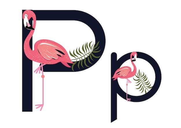 Pp flamingi