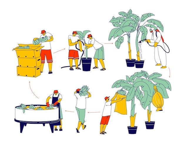 Pracownicy postacie na podlewaniu plantacji bananów