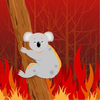 Problemu pożar lasu w australia ilustraci