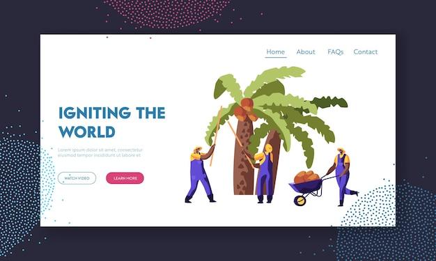 Produkcja oleju palmowego. pracownicy zbierają orzechy kokosowe z palmy, prace sezonowe, robotnicy zbierający plony na afrykańskiej lub azjatyckiej stronie internetowej plantacji, strona docelowa, strona internetowa. ilustracja wektorowa płaski kreskówka