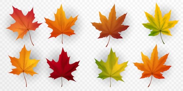 Projekt liścia klonu na jesień można izolować z przezroczystego tła