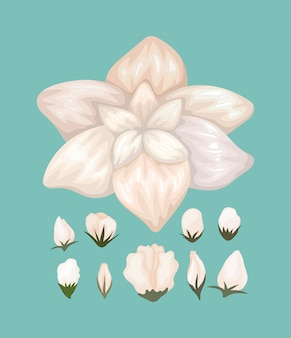 Projekt malowania białego kwiatu, naturalna dekoracja kwiatowa roślinna ozdoba ogrodowa i ilustracja motywu botanicznego