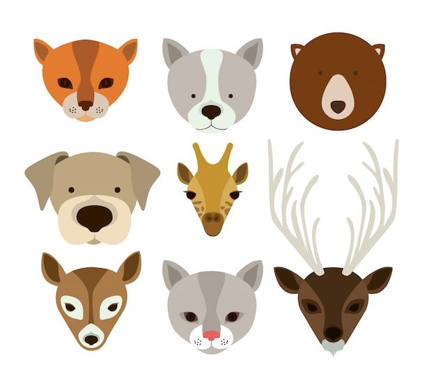 Projektowanie zwierząt