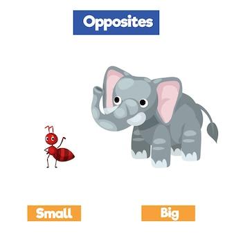 Przeciwne słowa z rysunkami kreskówek, słownictwo angielskie, mały, duży