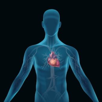 Przezroczysta niebieska sylwetka człowieka z anatomicznym sercem