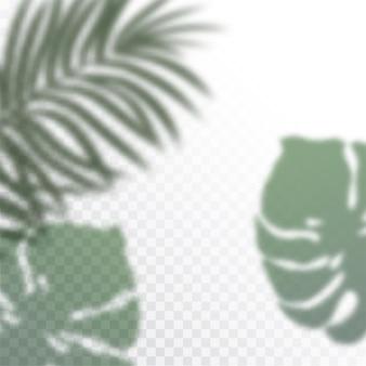 Przezroczyste cienie tropikalnych liści. efekt nakładki cienia. tło roślin tropikalnych. liście palmowe, liść dżungli. plakat do sprzedaży i szyld reklamowy.