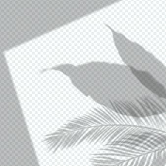 Przezroczysty cień nakłada się na rośliny