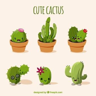 Przyjemny zestaw kaktusy