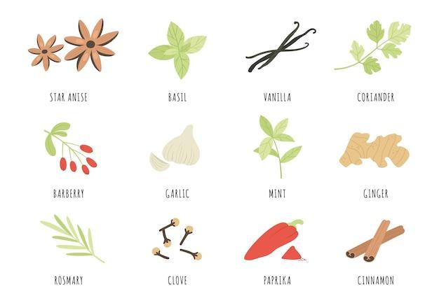 Przyprawy. ręcznie rysowane zioła i przyprawy anyż, bazylia i imbir, czosnek. cynamon, wanilia i papryka, mięta i rozmaryn, zestaw wektor goździków. aromatyczne składniki i smaki do gotowania i kulinarne