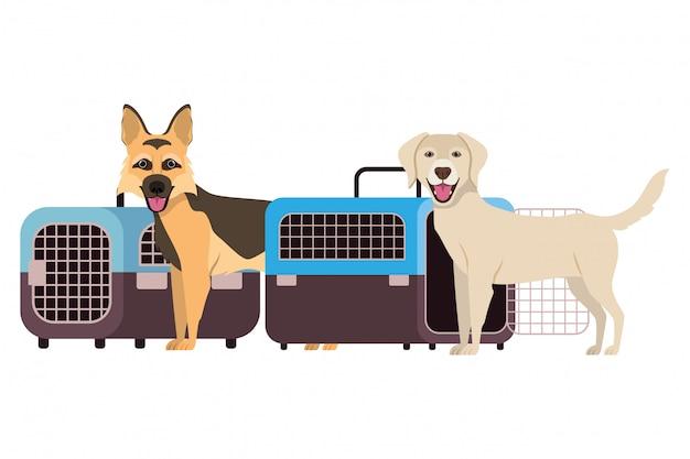 Psy i zwierzę domowe transportu pudełka na bielu