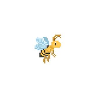 Pszczoła pszczoła
