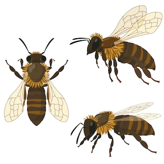 Pszczoła w różnych pozach. owad w stylu cartoon.