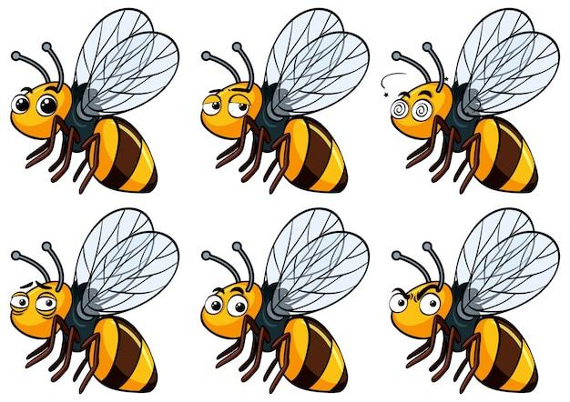 Pszczoła z różnymi wyrazami twarzy
