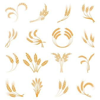 Pszenica. rolnictwo, kukurydza, jęczmień, łodygi