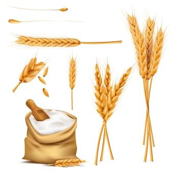 Pszenica uszy, ziarna i mąka w zestawie wektor worek