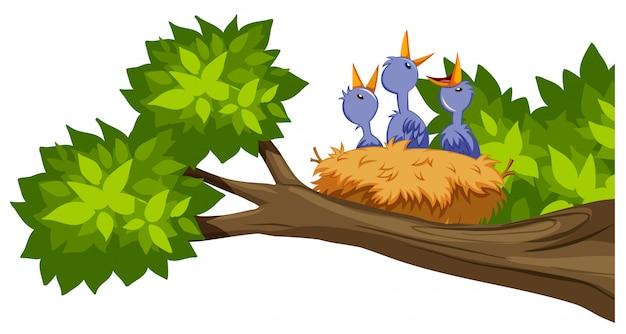 Ptak gniazdo na gałęzi drzewa