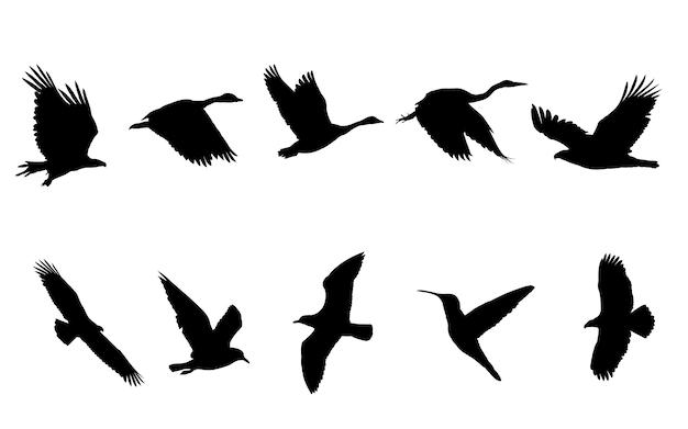 Ptak latający czarne sylwetki